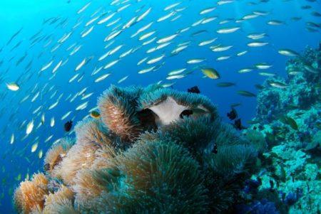 Kornati Islands diving